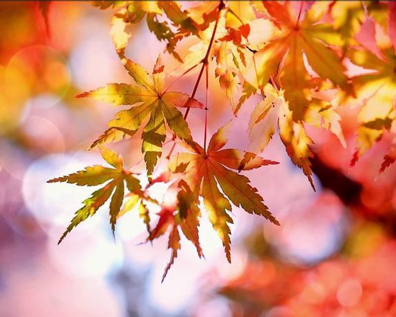 Academy Plaza Hotel | Dublin | Midweek Autumn Offer