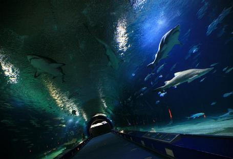 HOTEL CISCAR | Picanya (Valencia) | Oceanogràfic Experience