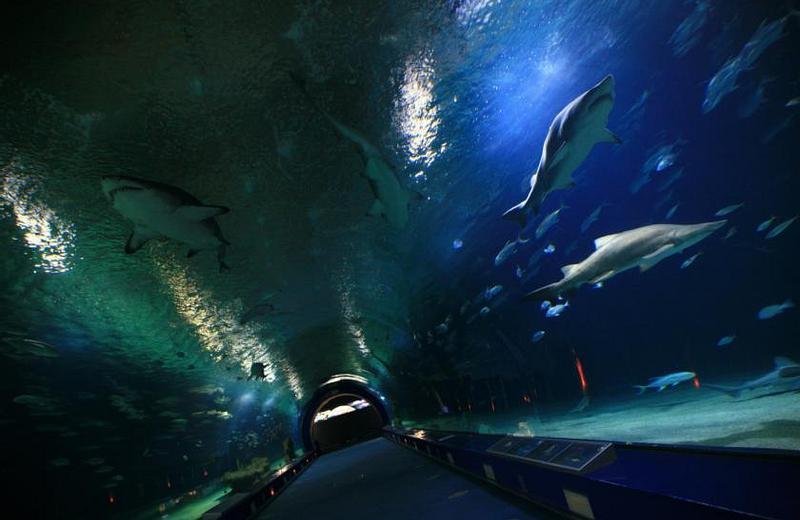 HOTEL CISCAR | Picanya (Valencia) | Experiencia Oceanogràfic