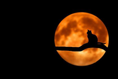 Blarney Woollen Mills | Blarney | Spooktacular Halloween Offer